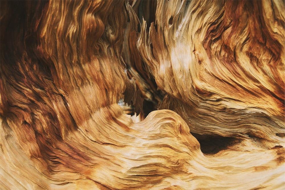 bowen-wood-session-1-sales